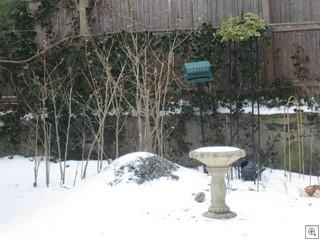Feb snow 010
