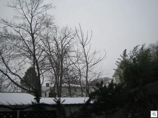 Snowstorm 004